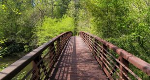 Chattooga River Trail: hiking from Russell Bridge to Adeline Ford