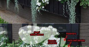 32 schöne Ideen, die Blumen für Fenster-Kästen kaskadieren