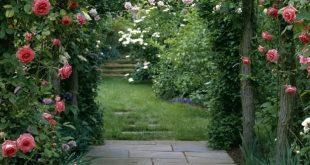 Arten von duftenden Kletterpflanzen: Im Freien: Heim- und Gartenfernsehen. ich mag